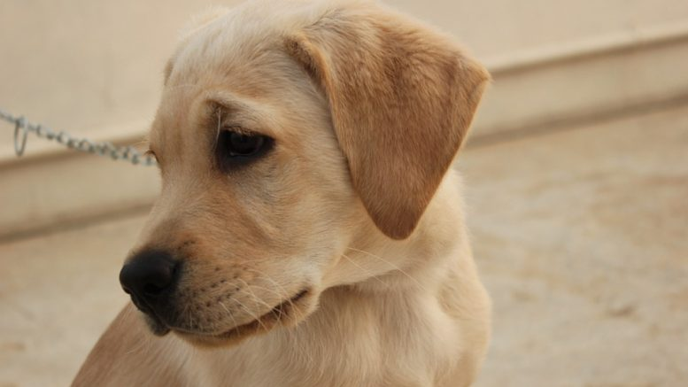 Picture of cute little puppy